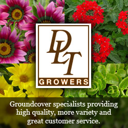 DLT Growers sells ground cover in Southern California